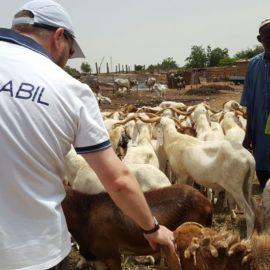 Rapport sur le projet humanitaire (al-Adha — 2016) à Niger, Bénin et Géorgie.